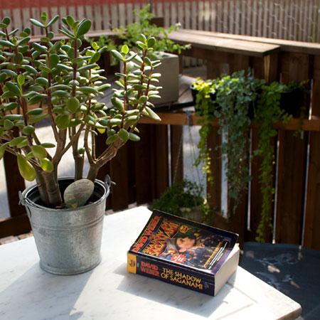 altaner kan också planteras med växter