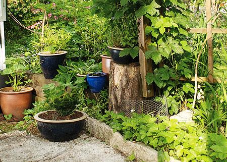 planera din trädgård på rätt sätt